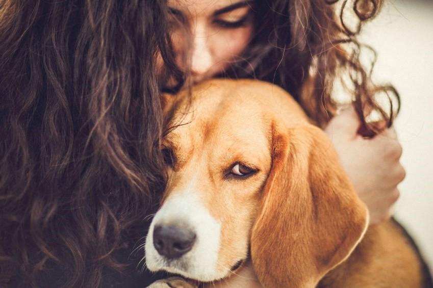 訓練師私房秘笈 4招找到伴你幸福的「好狗」
