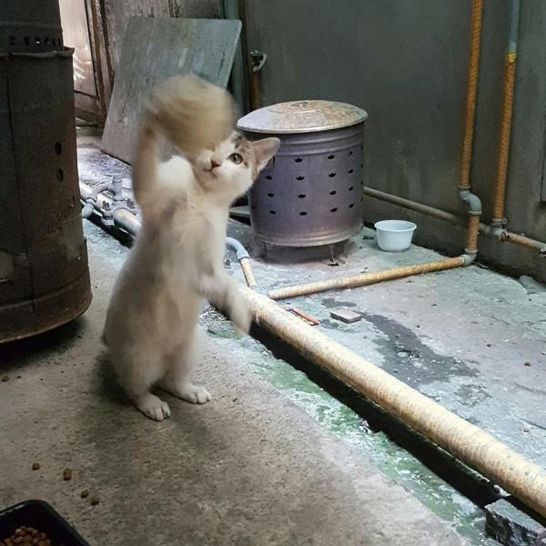 幼貓找家(3-4個月)