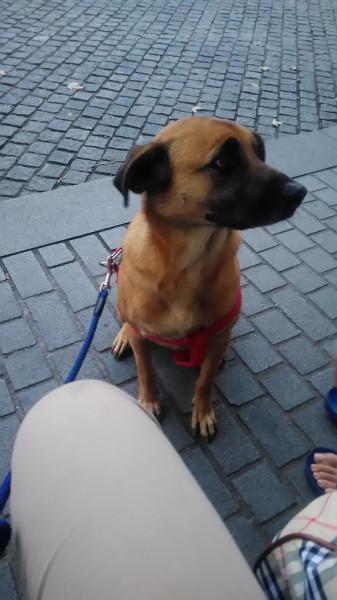 中原大學校園認養犬