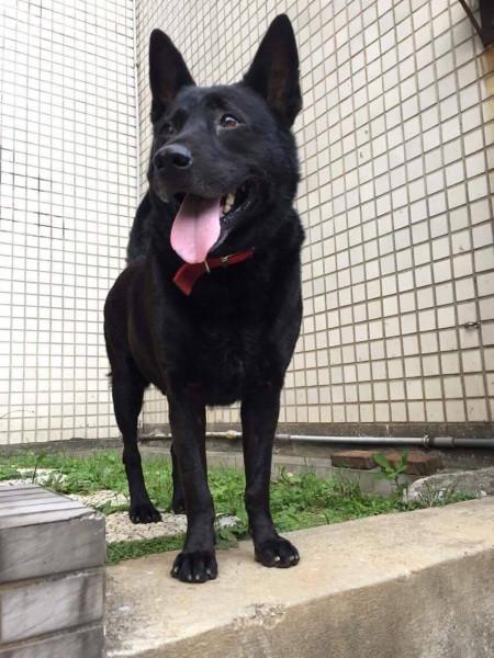 中原大學動物服務社校園認養犬