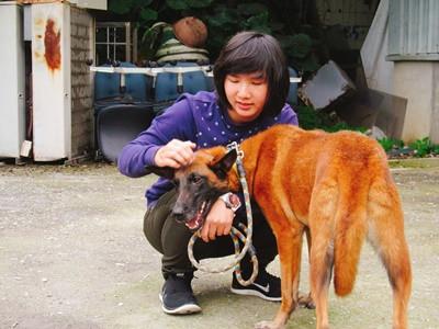 [全台] 親人愛撒嬌的比利時狼犬找家中