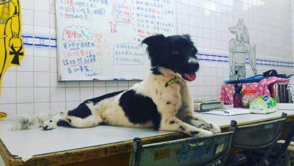 送養成犬by國立中興大學關懷生命社