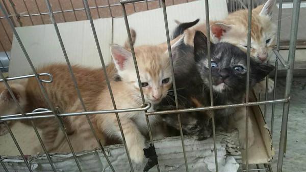 小貓咪送養