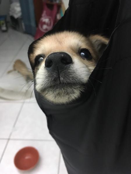 小萌犬米克斯