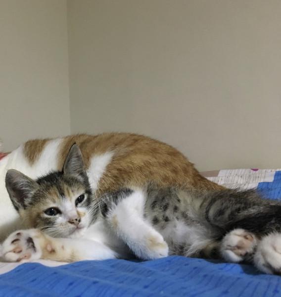 超塞奶小貓開放認養!