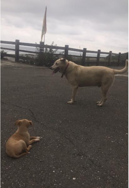 米克斯幼犬 尋找認養人