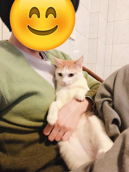 優質療癒貓
