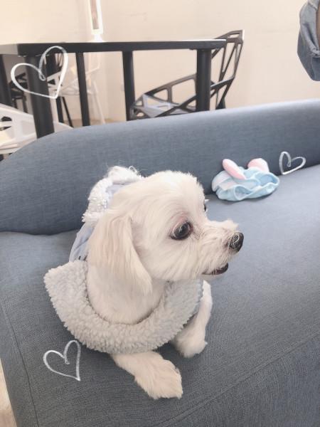 可愛乖巧的馬爾狗寶寶
