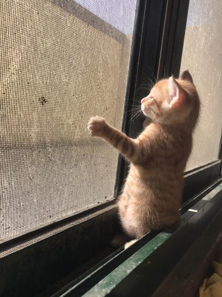 居家活潑小貓咪