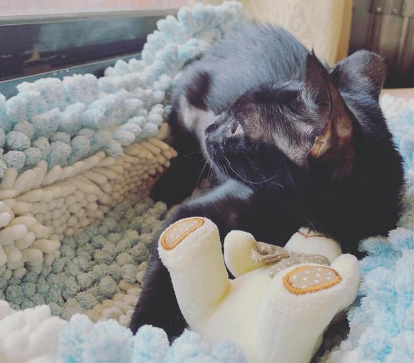 夏天會吸熱的貓