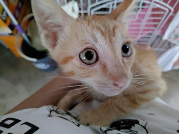 可愛的貓咪兄弟檔