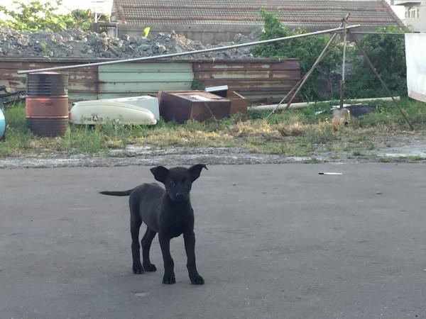 小浪犬找家