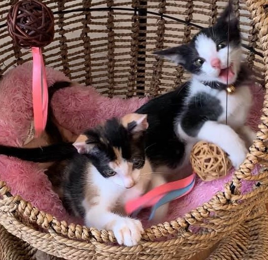 小奶貓兄妹尋找溫暖的家