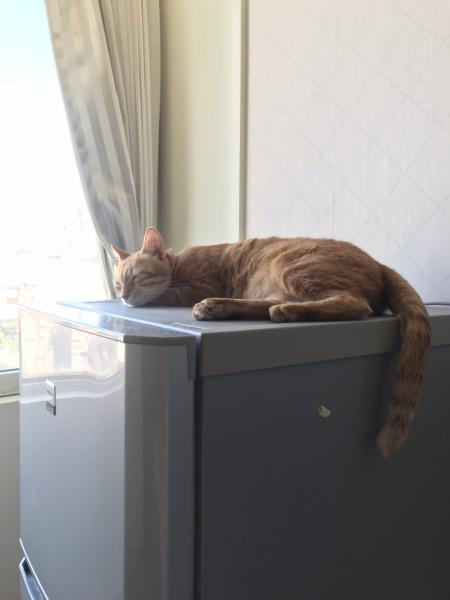 親人橘母成貓找家