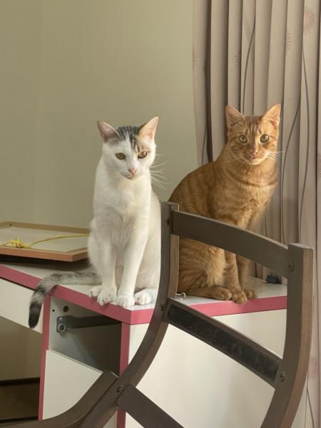 三隻小貓有緣人